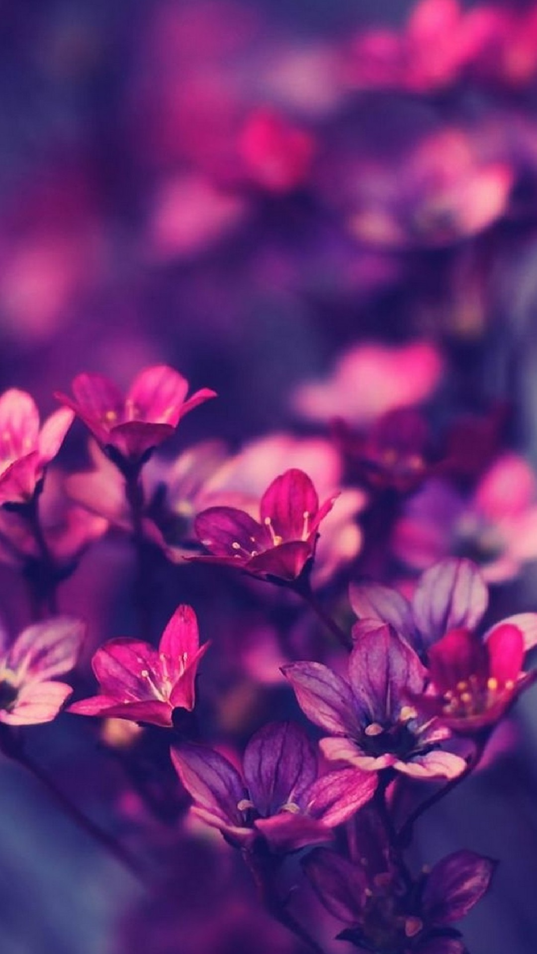 Flowers Purple iPhone Wallpaper Tumblr with high-resolution 1080x1920 pixel. You can set as wallpaper for Apple iPhone X, XS Max, XR, 8, 7, 6, SE, iPad. Enjoy and share your favorite HD wallpapers and background images